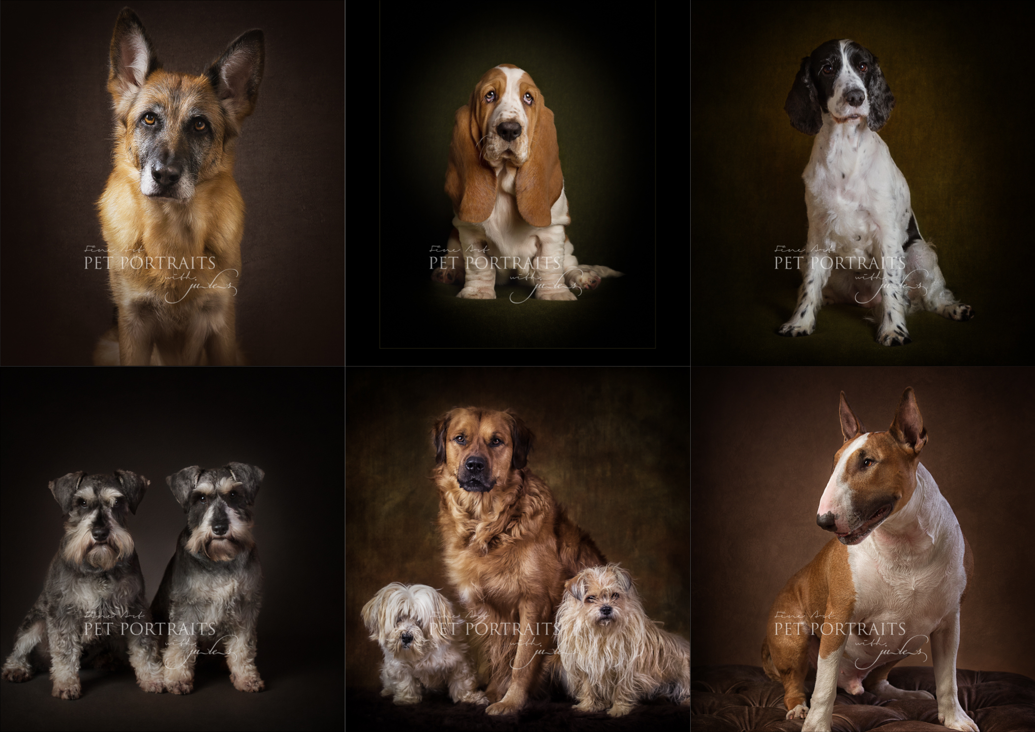 Leicester Pet Photographer_julesphotography_petportraits