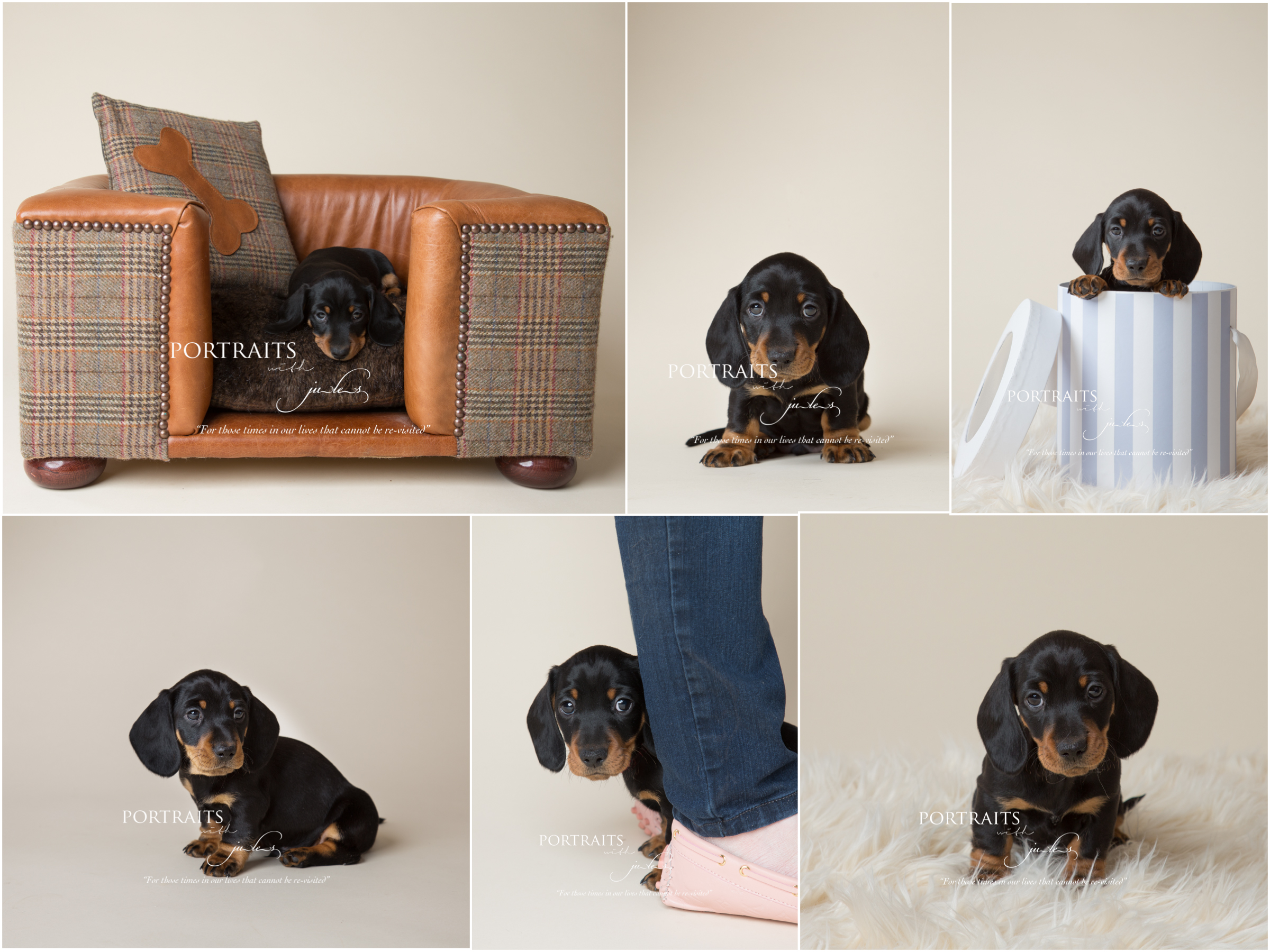 julesphotography_leicester_pet_photographer_03